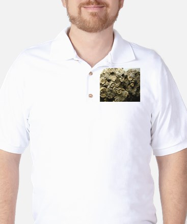 cluster of fossil shells Golf Shirt