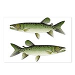 Kafue African pike Postcards (Package of 8)