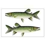 Kafue African pike Posters
