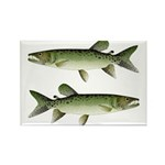 Kafue African pike Magnets