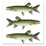 Kafue African pike Square Car Magnet 3