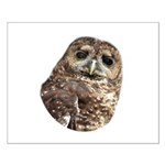 Northern Spotted Owl Small Poster