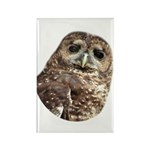 Northern Spotted Owl Rectangle Magnet (100 pack)