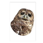 Northern Spotted Owl Postcards (Package of 8)