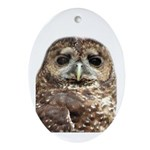 Northern Spotted Owl Oval Ornament