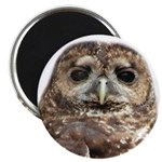 Northern Spotted Owl Magnet