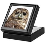 Northern Spotted Owl Keepsake Box