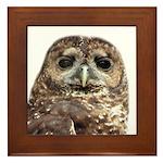 Northern Spotted Owl Framed Tile