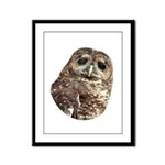 Northern Spotted Owl Framed Panel Print