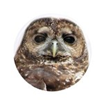 Northern Spotted Owl 3.5