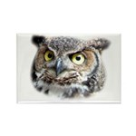 Great Horned Owl Face Rectangle Magnet (100 pack)