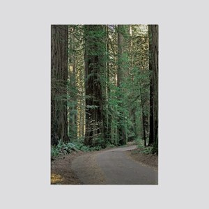 Redwood Path Rectangle Magnet