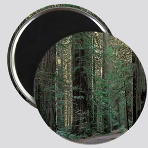Redwood Path Magnet