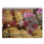 North Pacific Ocean Life Wall 2013 Calendar v4