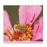 Katydid in Flower Tile Coaster