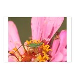 Katydid in Flower Postcards (Package of 8)