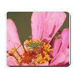Katydid in Flower Mousepad