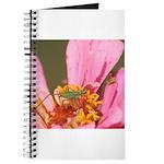 Katydid in Flower Journal