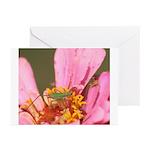 Katydid in Flower Greeting Cards (Pk of 10)