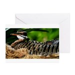 Sunbittern Greeting Cards (Pk of 10)