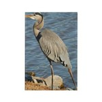 Great Blue Heron Rectangle Magnet