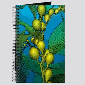 Kelp Journal