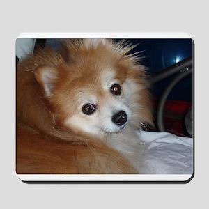 Peppy the Pomeranian Mousepad