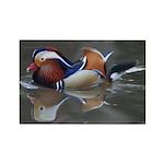 Mandarin Duck Rectangle Magnet (100 pack)