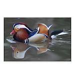 Mandarin Duck Postcards (Package of 8)