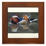 Mandarin Duck Framed Tile