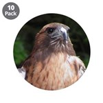 Redtailed Hawk 3.5