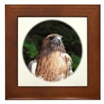 Redtailed Hawk Framed Tile