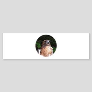 Redtailed Hawk Bumper Sticker