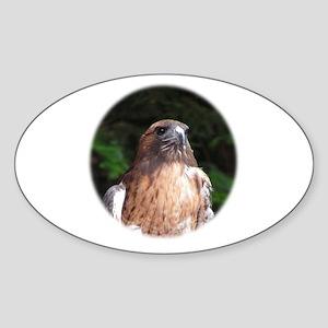 Redtailed Hawk Oval Sticker