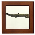 Alligator Framed Tile