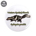 Western Spotted Skunk 3.5