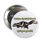 Western Spotted Skunk 2.25