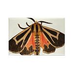 Tiger Moth Rectangle Magnet (100 pack)