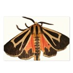 Tiger Moth Postcards (Package of 8)