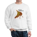 Thornbug Sweatshirt