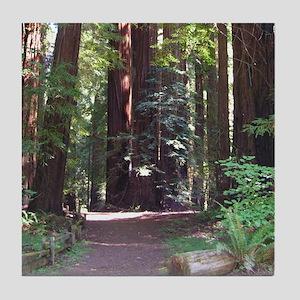 Redwood Trail Tile Coaster