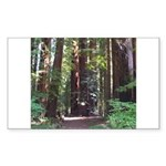 Redwood Trail Rectangle Sticker