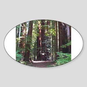 Redwood Trail Oval Sticker