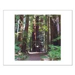 Redwood Trail Small Poster