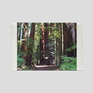 Redwood Trail Rectangle Magnet