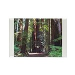 Redwood Trail Rectangle Magnet
