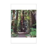 Redwood Trail Mini Poster Print