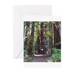 Redwood Trail Greeting Cards (Pk of 20)