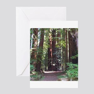 Redwood Trail Greeting Card