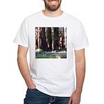The Redwood Highway White T-Shirt